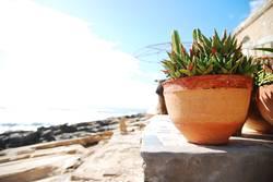 Zimmerpflanze im Urlaub