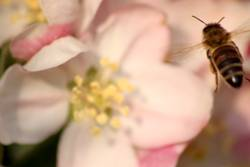 Bee placid 2/4