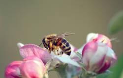 Bee placid (4/4)