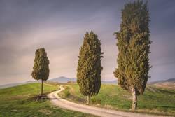 Toskana Bäume zwischen der Straße