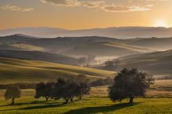 Tuscan fields and olive trees at sunrise in a mystical fog