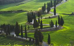 Landscape Road in Tuscany