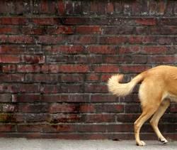 Halber Hund vor Rechteck auf Rundgang im Viertel