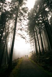 durch den Wald | wertvoll
