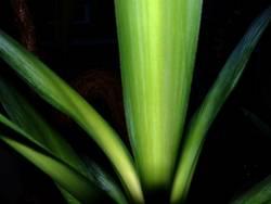 Palm(e)-Top