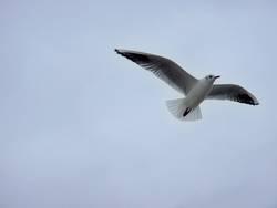 kommt ein Vogel geflogen ...