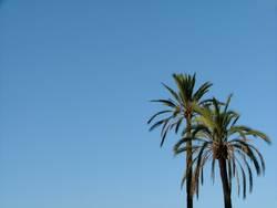 Palmen im Himmel