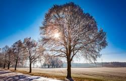 Winter frost in Allgaeu