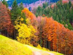 Laubfärbung im Herbst
