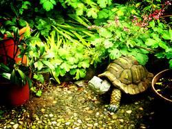 garden gnome turtle in the backyard
