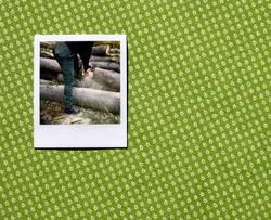 Das Holz eines Baums ist für Leute gut