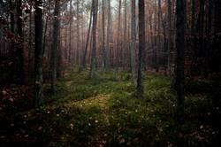Heidelbeerwald