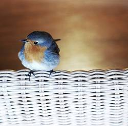 Lieber Vogel, fliege weiter! Nimm ein Gruß mit und ein Kuss
