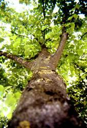 Baum aus Katzenperspektive