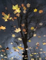 Die Blätter sind gefallen