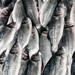 Freitags gibt´s Fisch