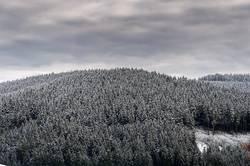 Schwarzwaldweiß