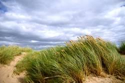 Windy Inch