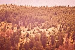 Waldsicht