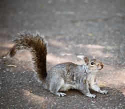 Hörnchen zum Frühstück