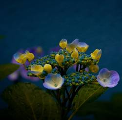 Mittwochsblümchen II