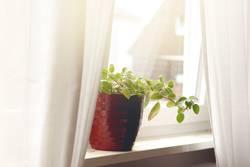 Zimmerpflanze im roten Übertopf
