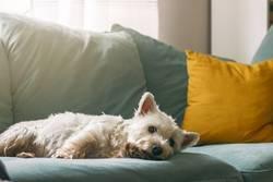 Gemütlicher Hund