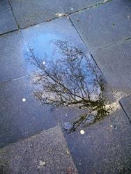 Pfützenbaum
