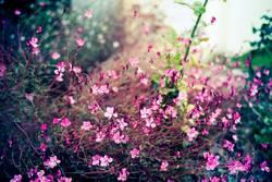 Blumenwind