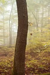 Baum im Nebelwald