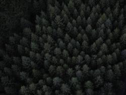 Kohl oder Wald ?