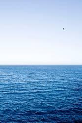 Blue ocean with bird