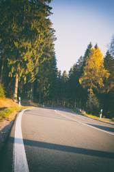 Waldstrasse in der Sonne