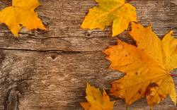 Goldgelber Herbst