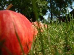 Apfelparade