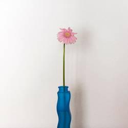 Rosa Blume in blauer Vase