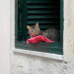 Lissabonner Katze