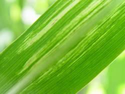 sonnengrün