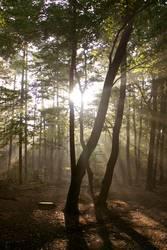 Sonnenschein im Wald (2)