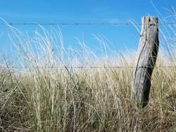 Zaun in den Dünen
