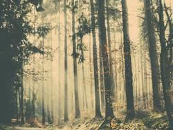 Ein Waldmärchen