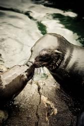 Sie dürfen die Robbe jetzt küssen