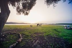 sunset with Two horses in a meadow
