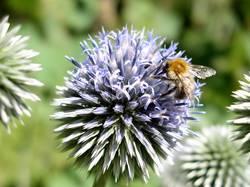 Bienenkugel
