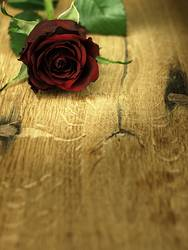 Red rose on a wooden, oak table.