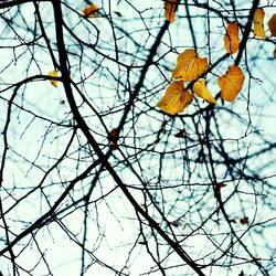 Fallende Blätter... 2