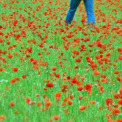 walkin' on the mohn