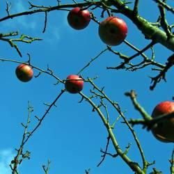 Schmuck am Baum