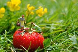 Miniaturfiguren - ErdbeerPflücker