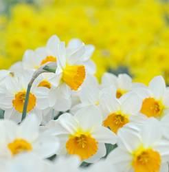 frisch*fröhlich*Frühling